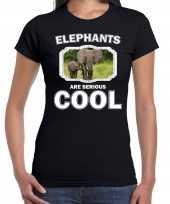 Dieren olifant t-shirt zwart dames elephants are cool shirt olifant kalf